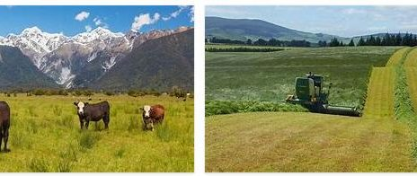New Zealand Agriculture